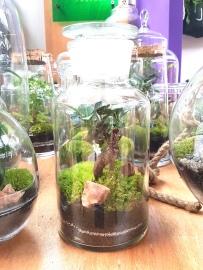 Les terrariums de @greenfactory