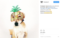 Instagram @flyingtigerfr
